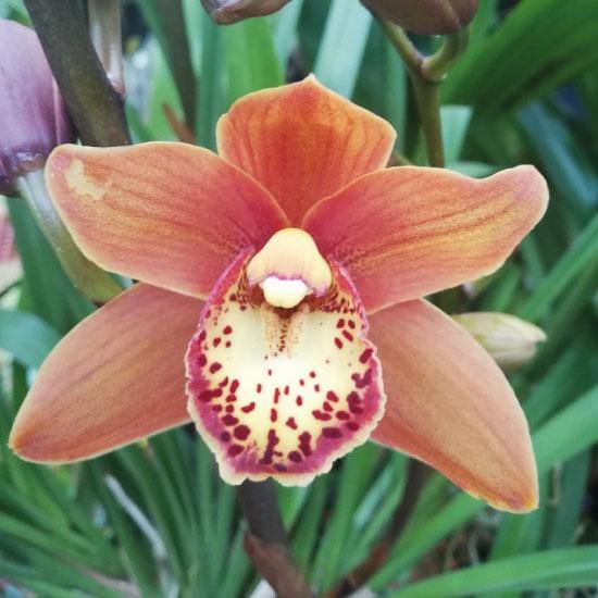 Orquidea1-(1)
